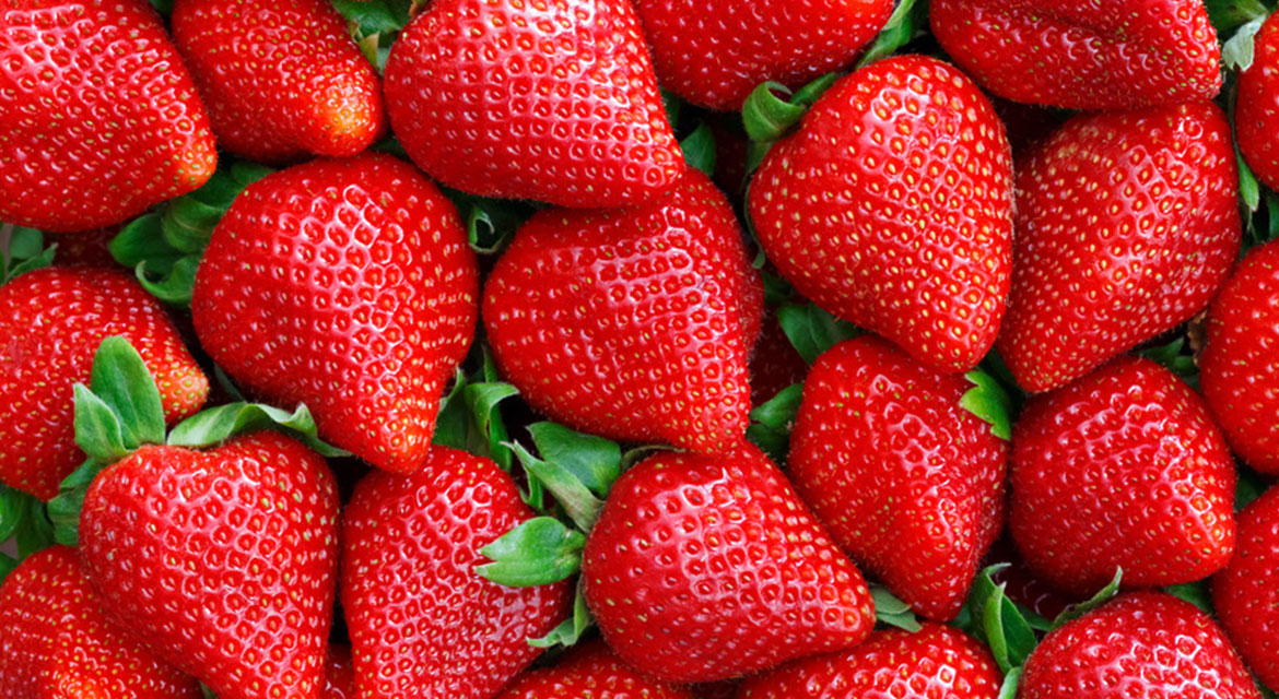 Amazing strawberries grown by Hall Hunter